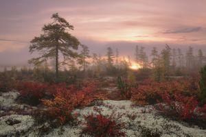 Туманный рассвет · бесплатное фото