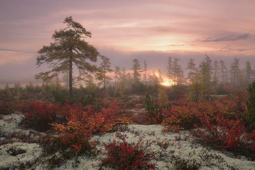 Misty dawn · free photo
