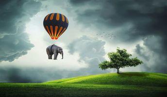 Бесплатные фото Слон,воздушный шар,летать,дерево,поле,Кукурузное поле,природа