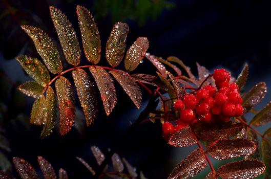 Фото бесплатно капли, листья, природа