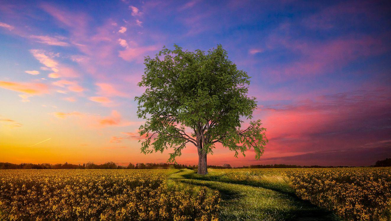 сказочный закат · бесплатное фото