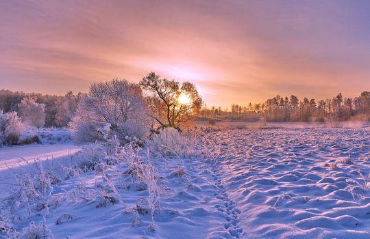 Бесплатные фото зима,закат,снег,деревья,сугробы,пейзаж