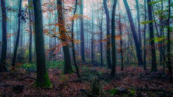 Заставки утро, туман, природа