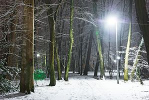 Фото бесплатно зима парк, лес, деревья