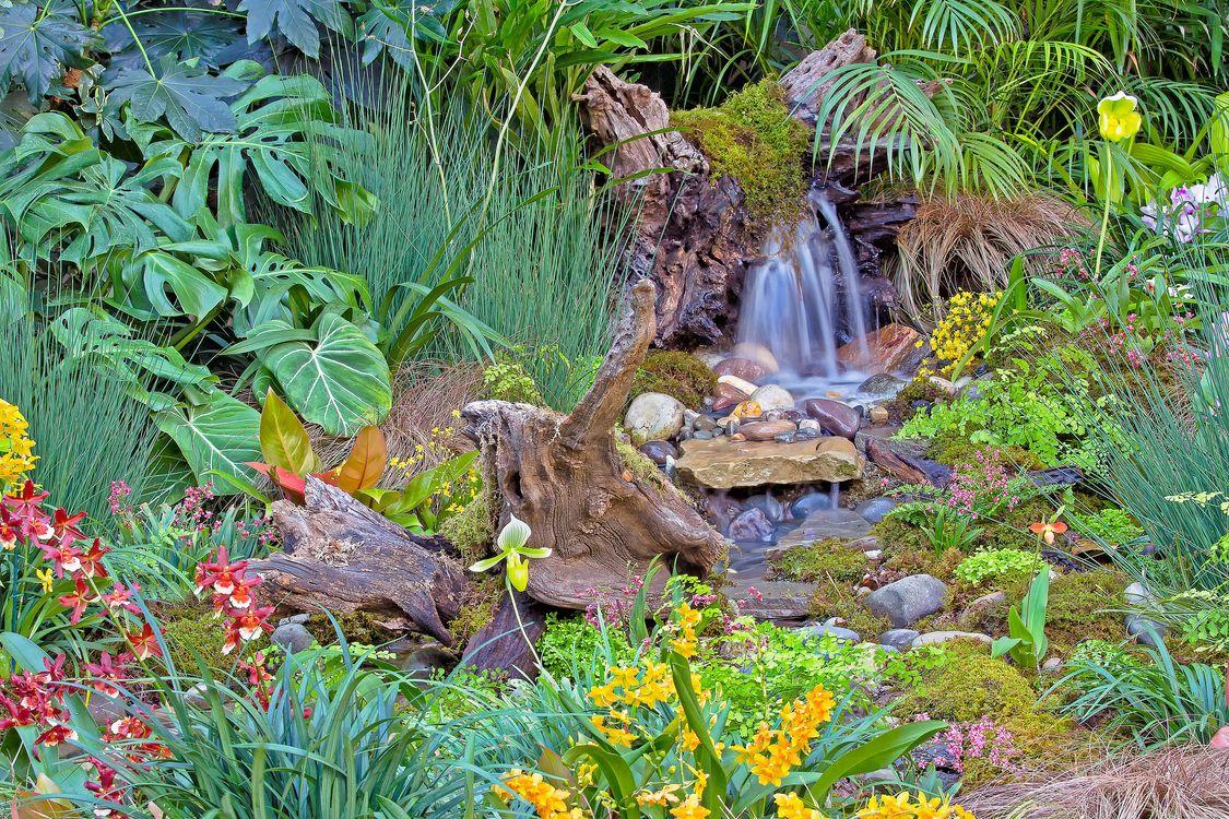 Фото бесплатно Longwood Gardens Tropical Orchid Garden, Сад тропических орхидей Лонгвуд садов, Сады Лонгвуда, цветы, камни, коряга, растения, флора, ручей, водопад, орхидеи, природа, природа