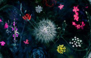 Фото бесплатно трава, манипуляции, макро