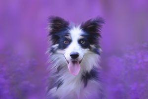 Photo free dog, portrait, animal