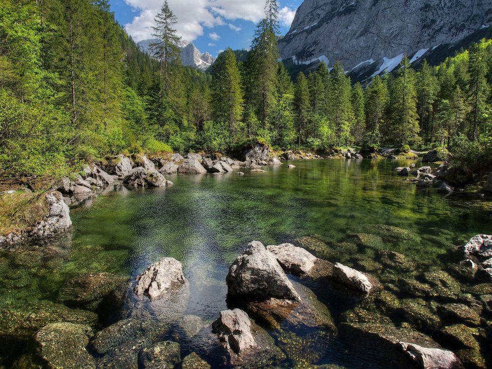 Фото бесплатно лес, пруд, деревья - на рабочий стол