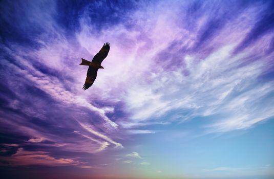 Photo free sky, clouds, bird of prey