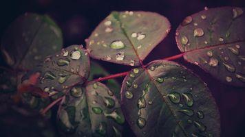 Капли воды на листках