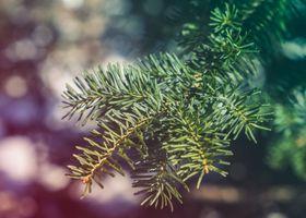 Бесплатные фото ель,еловая ветка,ёлка,иголки,природа,макро