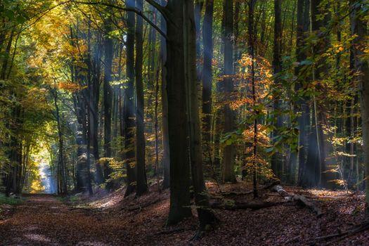 Фото бесплатно природа, пейзаж, сказка