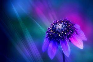 Фото бесплатно цветы, растение, макро