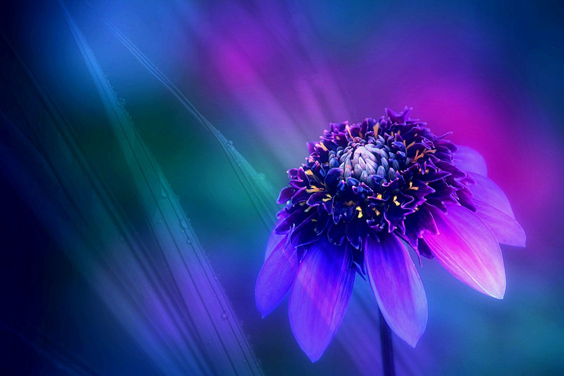 Фото бесплатно цветы, растение, макро - на рабочий стол