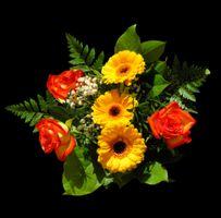 Фото бесплатно Красивый букет, флора, цветок