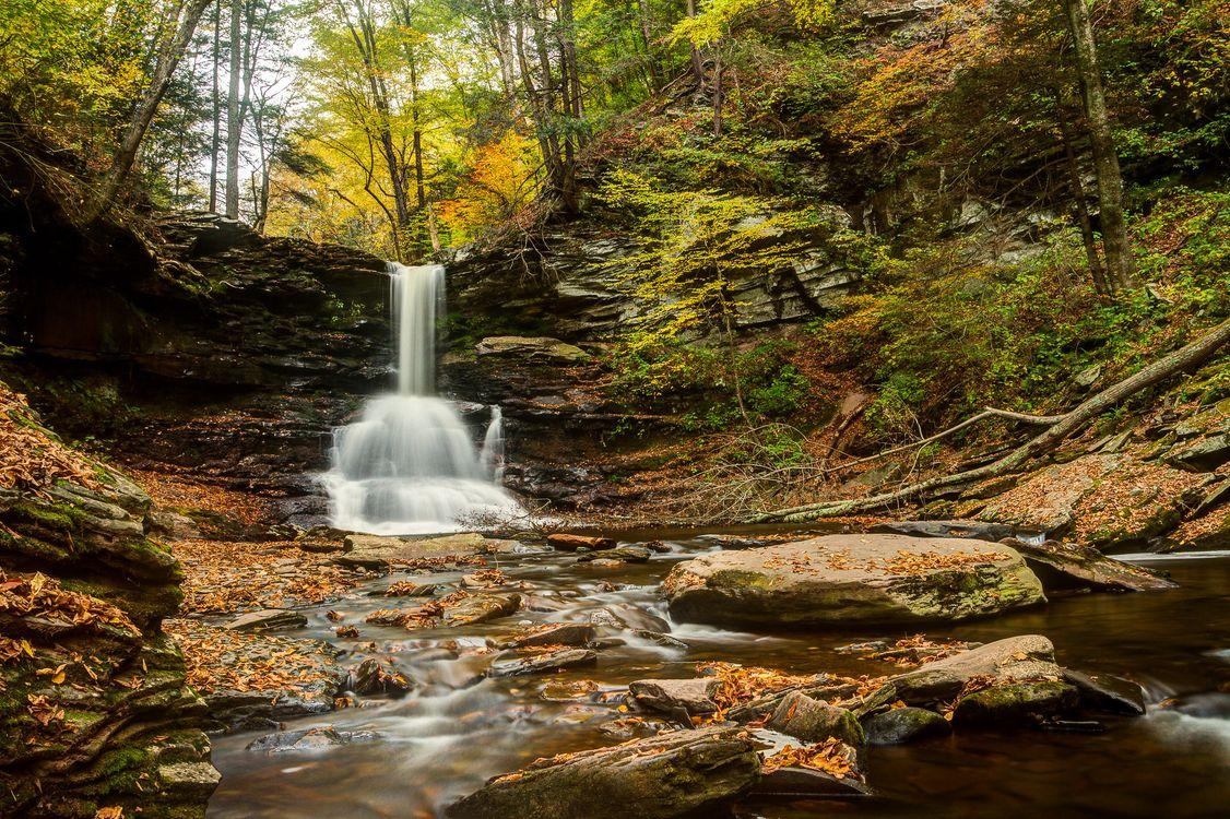 Обои Ricketts Glen State Park, осень, лес картинки на телефон