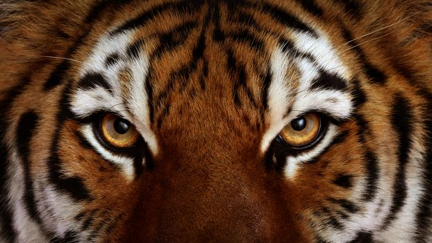 Photo free cat, eye, face