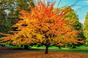 Photo free fall colors, landscape, Park