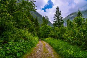 Заставки Бад-Гаштайн,лесная дорога,Австрия,Bad Gastein лес,дорога,деревья,природа