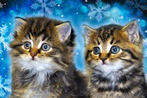 Фото бесплатно котята, двойняшки, мордочки