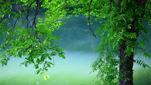 Photo free leaves, trees, nature