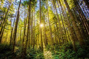 Фото бесплатно природа, солнце, лес