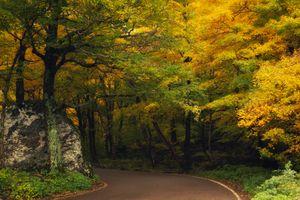 Заставки осенние листья, природа, осенние краски