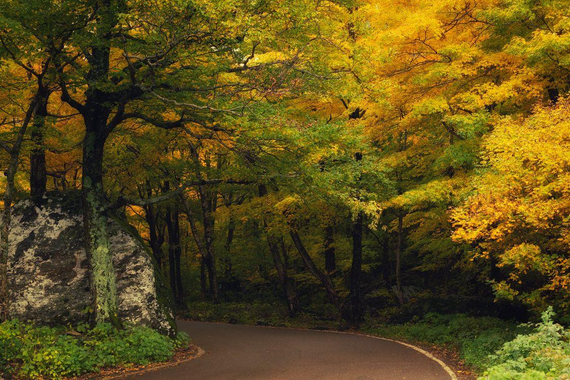 Фото бесплатно осенние листья, природа, осенние краски - на рабочий стол