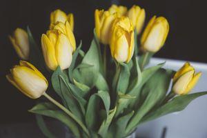Фото бесплатно растения, макро, крокус