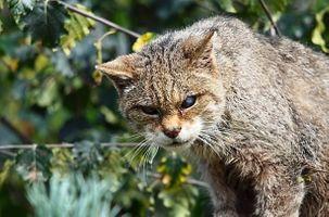 Кот со больным глазом