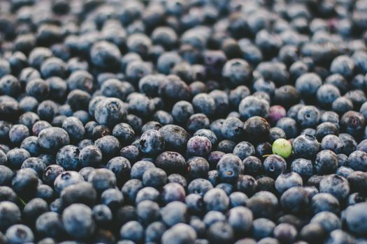 Photo free blueberry, berries, many