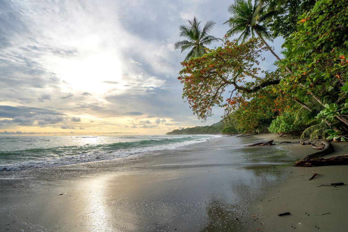 Фото бесплатно Cordovaro, Коста-Рика, пляж - на рабочий стол