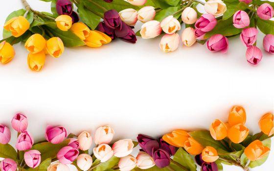 Заставки весна, природа, тюльпаны