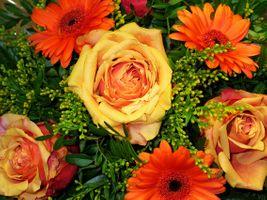 Фото бесплатно флора, букет, цветок