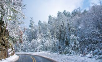 Фото бесплатно лес, панорама, зима