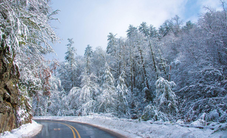Картинка зима, снег, лес, деревья, сугробы, дорога, пейзаж, панорама на рабочий стол. Скачать фото обои пейзажи