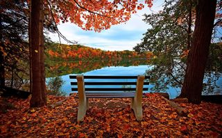 Photo free autumn, bench, forest
