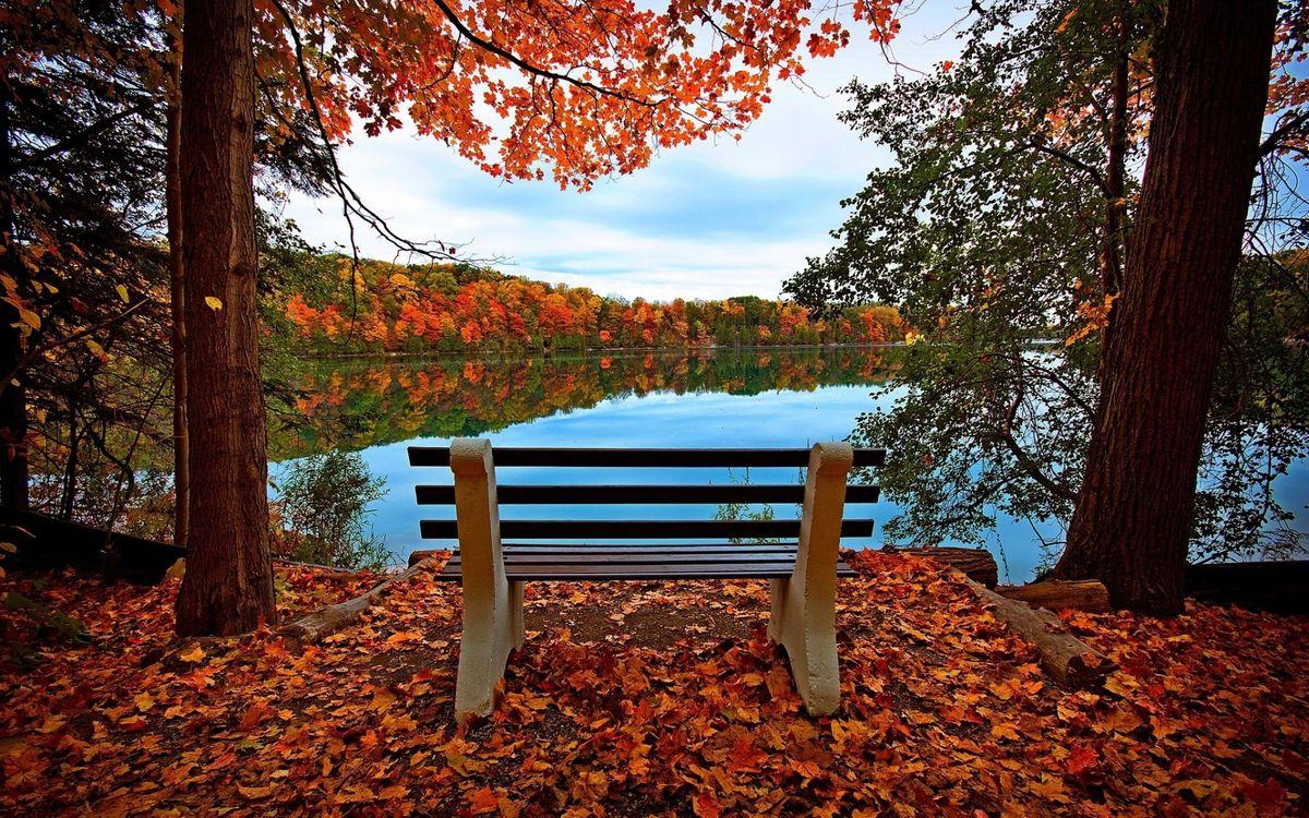 Фото бесплатно осень, скамья, лес - на рабочий стол