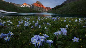 Аквилегия у озера в горах · бесплатное фото