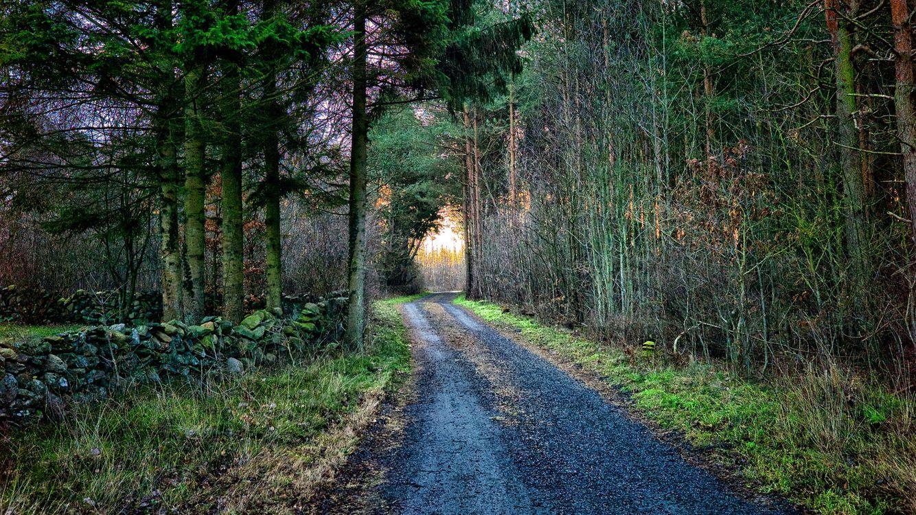 Обои лес, дорога, ограждение, каменный забор, кладка, тропа, деревья, природа, пейзаж на телефон | картинки пейзажи