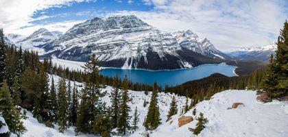 Заставки Alberta, лес, небо