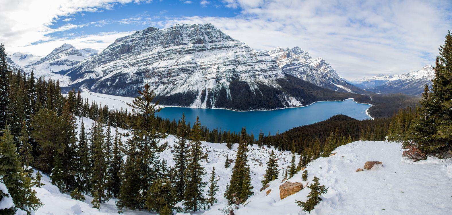 Фото бесплатно Alberta, лес, небо - на рабочий стол