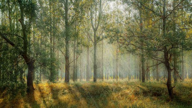 Бесплатные фото пейзаж,дерево,природа,лес,на открытом воздухе,пустыня,туман,луг,солнечный лучик,утро,лист,зеленый