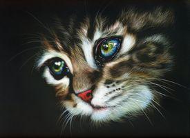 Фото бесплатно кот, кошка, морда, взгляд, чёрный фон, art