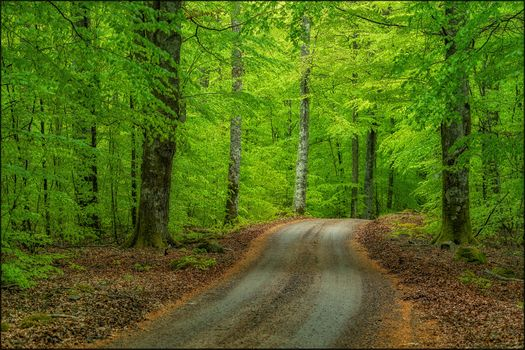 Заставки лес,едем по лесной дороге,деревья,дорога,природа,пейзаж