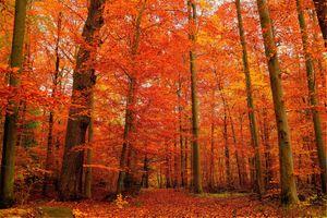 Фото бесплатно деревья, осень, апельсин
