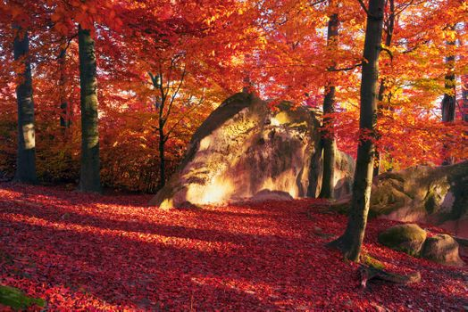 Photo free autumn, red leaves, trees