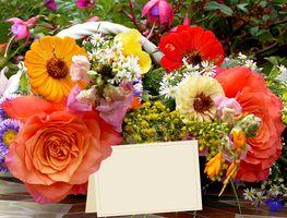 Фото бесплатно цветы, красочные, оригинальные