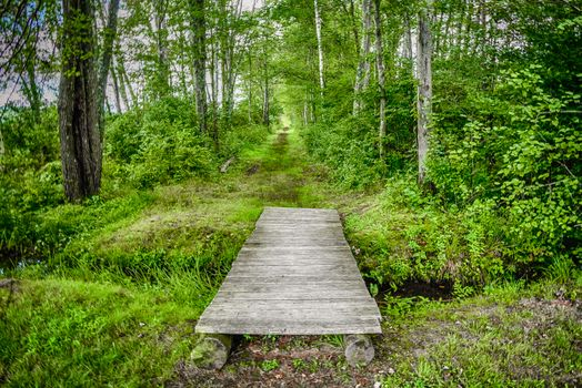 Photo free trail, forest, landscape