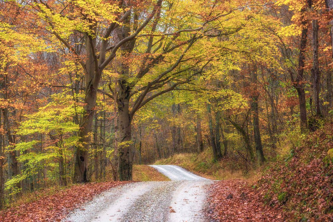 Фото бесплатно осень, лес, дорога, деревья, природа, осенние краски, пейзаж, пейзажи